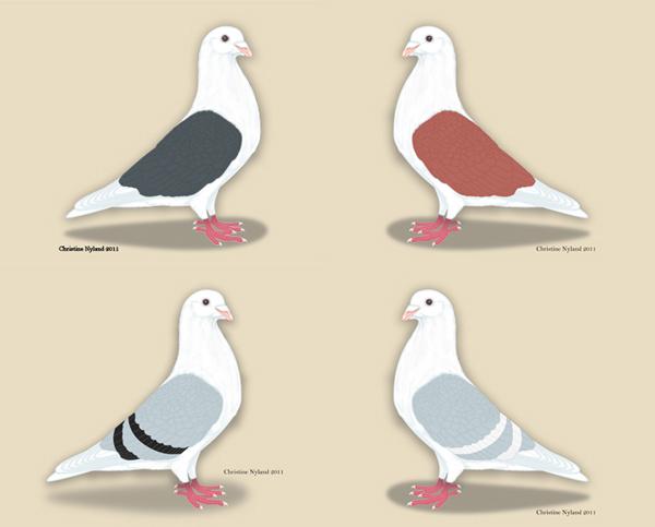 Christine Nyland Pigeon Art