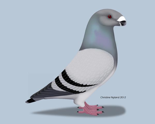 Christine Nyland Pigeon Art: pigeonart.christinenyland.com/show_racer.html